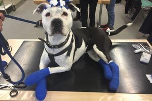 15.12.2020 Erste-Hilfe am Hund